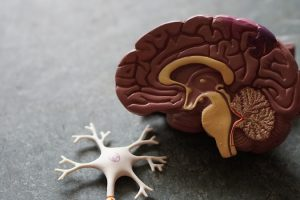 Psychedelics for Brain Injury A Mini-Review